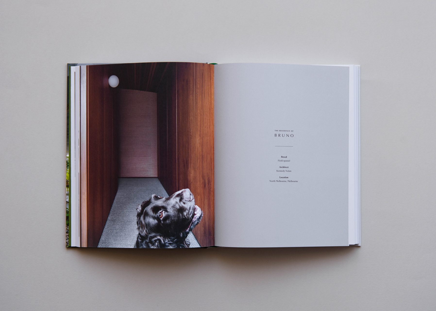 Resident Dog Book Design Designer Melbourne Publication Design Graphic Design